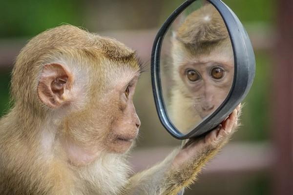 Эксперименты с обезьянами