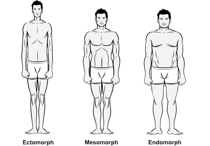 тип телосложения
