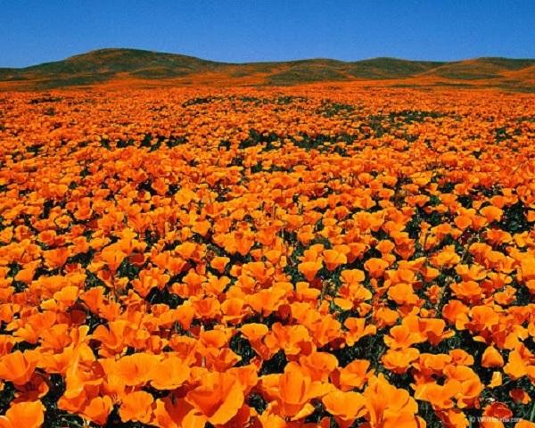 Влияние оранжевого на человека