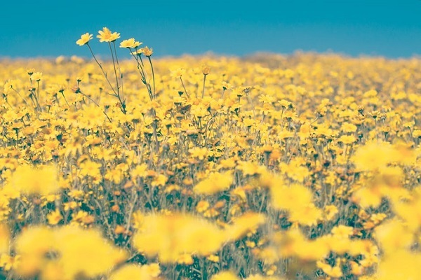 Как желтый цвет влияет на человека