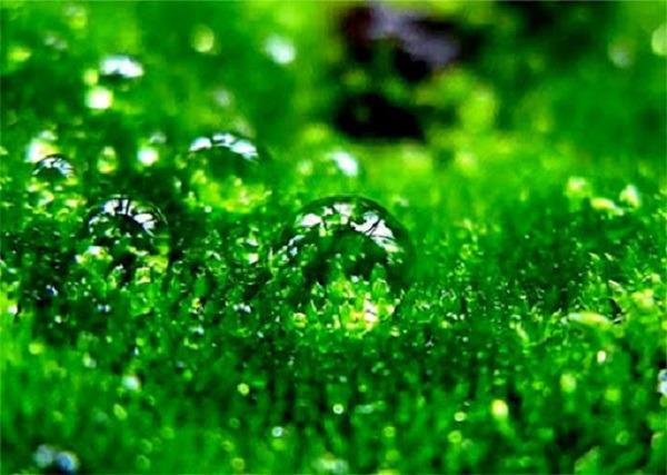 Значение зеленого цвета в психологии для женщин