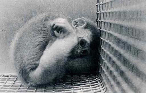 страх обезьяны