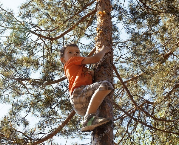 ребенок залазит на дерево